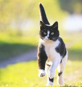 déclarer votre chat à une assurance habitation